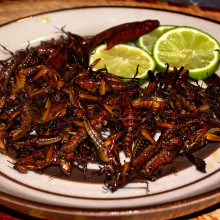 With some of the best food in the country here in Devon would we ever move towards eating more insects?