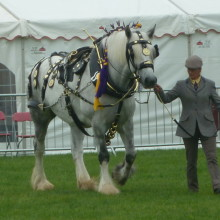 A memorable day at Okehampton show, a fine demonstration of all that is good in Devon.